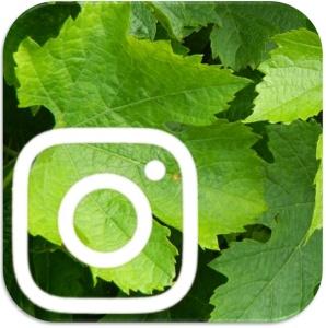 vinstagram_logo