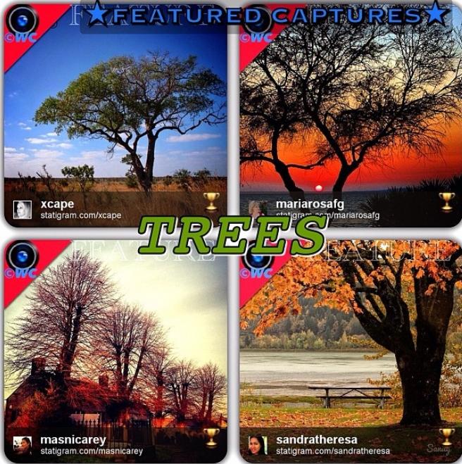 arbres (2)