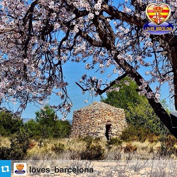 Loves barcelona 14-3-14